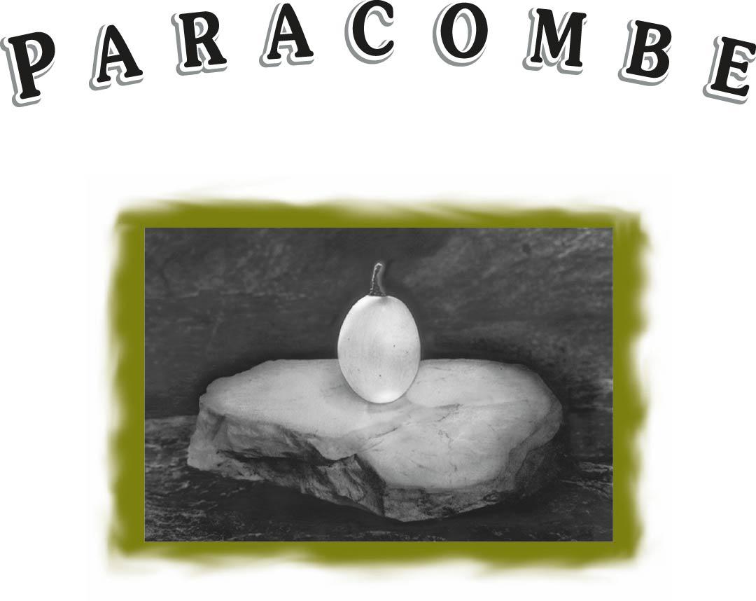 paracombe wines logo@1080x-50